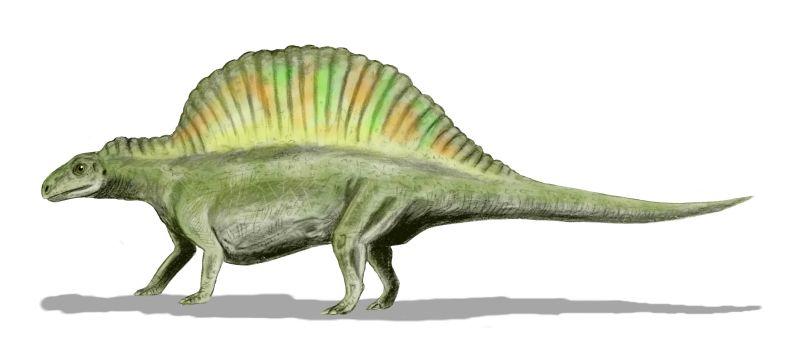 Image:Ctenosauriscus BW.jpg